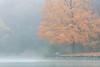 Maple Fog III