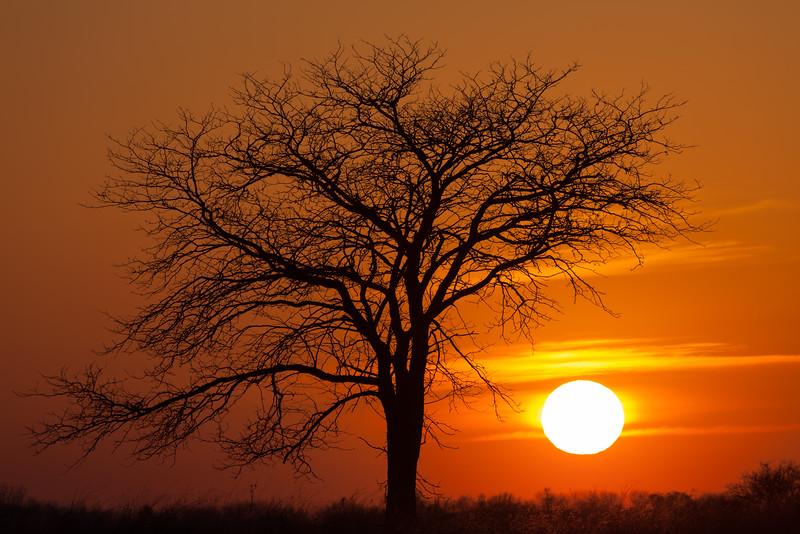 Springbrook Creek sunset. Naperville, IL<br /> <br /> IL-090317-0005