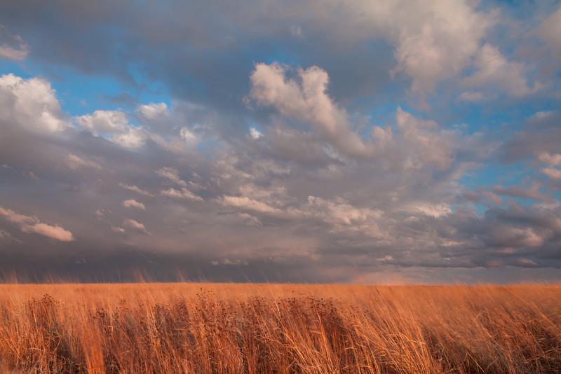 Stormfront moving over Springbrook Prairie. Naperville, IL<br /> <br /> IL-090331-0053