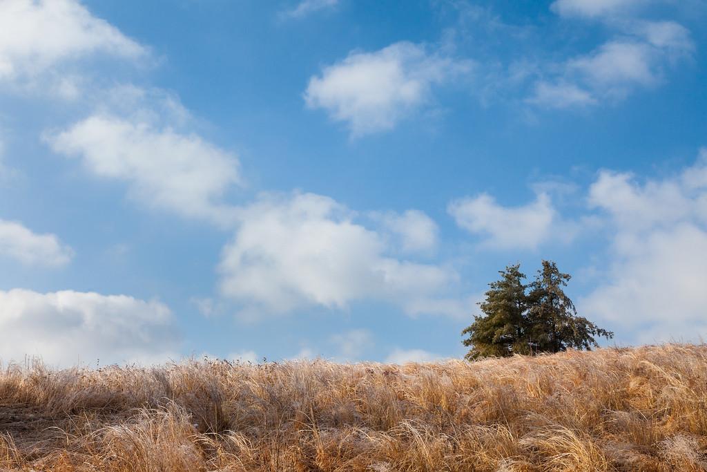 Crystallized Grasses