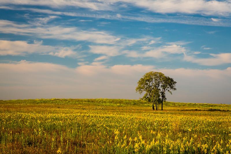 Golden Prairie