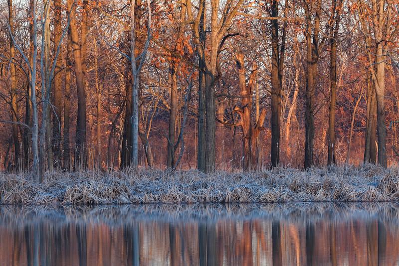Sunrise light over the woods in 91st Marsh. Darien, IL<br /> <br /> IL-090314-0012