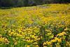 Wildflower Quilt