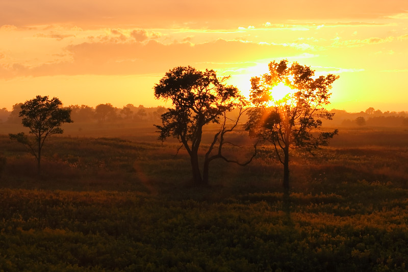 Early autumn sunset in Springbrook Prairie. Naperville, IL<br /> <br /> IL-060923-0012