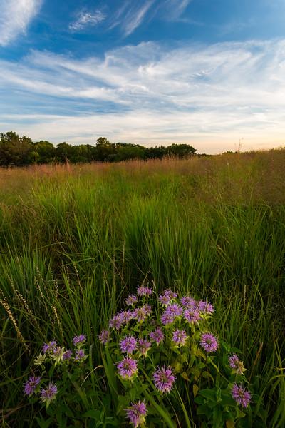 Amongst the Grasses