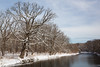 Oak Snow