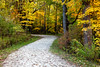 Fall color in the woods of Warrenville Grove. Warrenville, IL<br /> <br /> IL-091017-0058