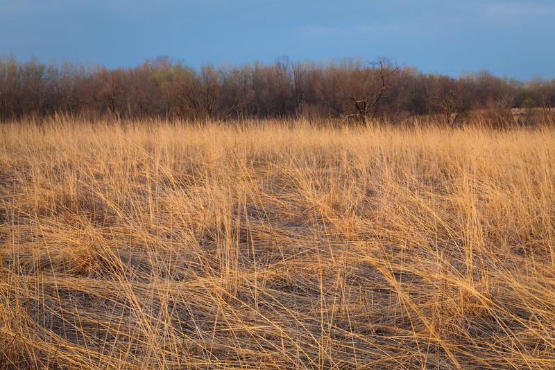 Grass field in Night Heron Forest Preserve. Aurora, IL<br /> <br /> IL-100406-0019