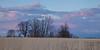 Springbrook Prairie spring scene. Naperville, IL<br /> <br /> IL-090331-0101