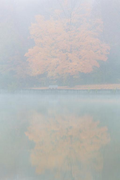 Maple Fog II