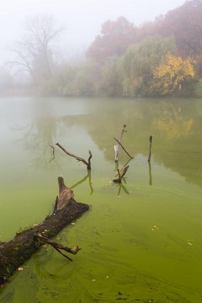 Herric Lake Fog