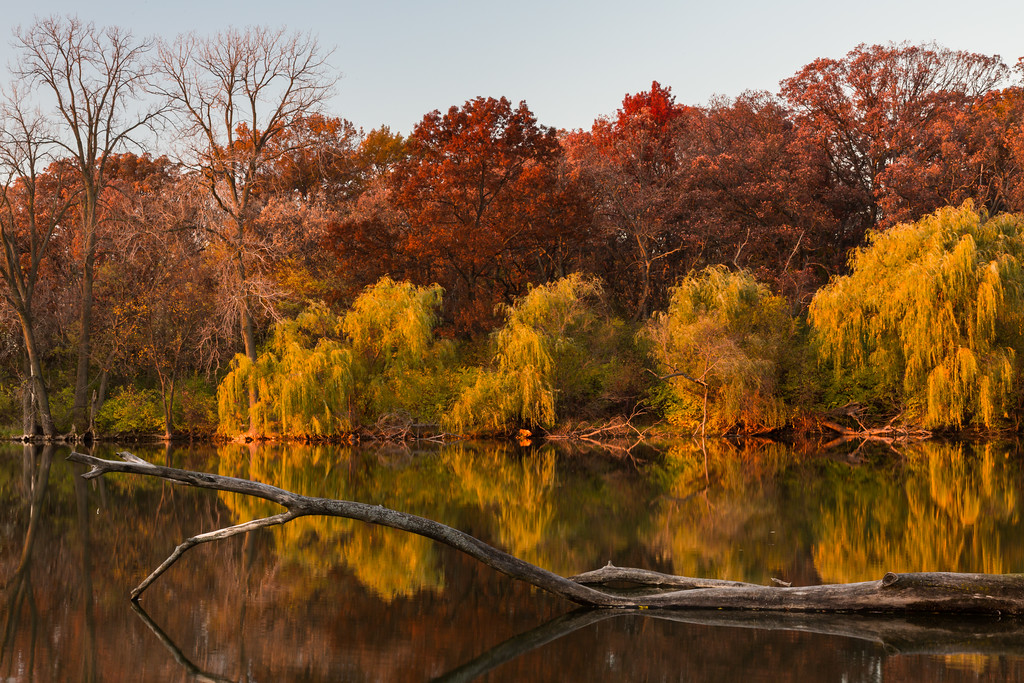 Sunset light shines on the tree line in the shore of one of the lakes in Herrick Lake Forest Preserve. Naperville, IL<br /> <br /> IL-151103-0137