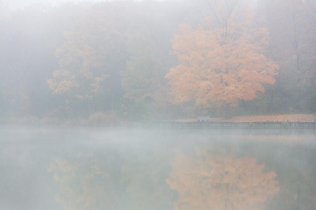 Maple Fog I