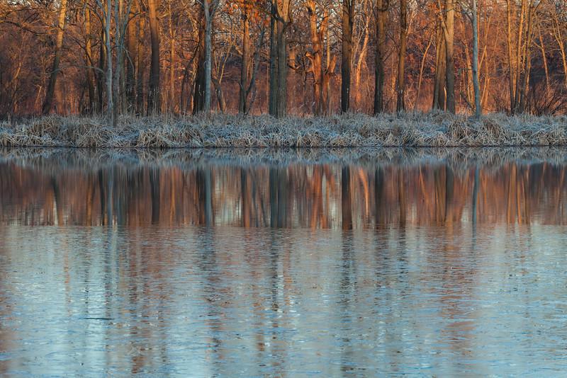 Sunrise light over the woods in 91st Marsh. Darien, IL<br /> <br /> IL-090314-0014