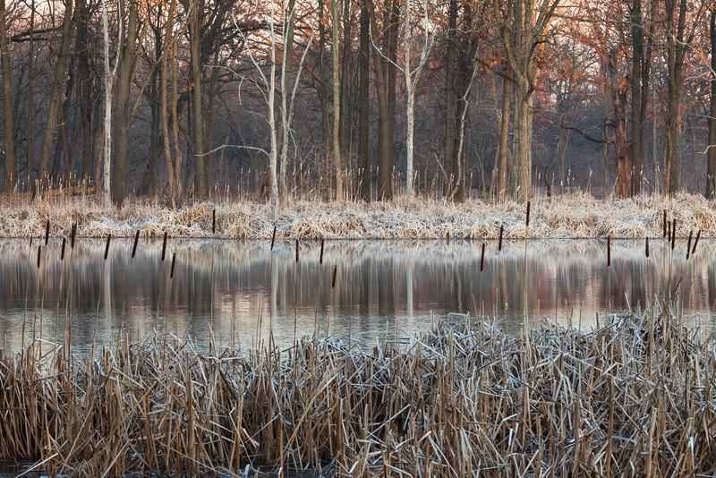 Early morning light at 91st Marsh. Darien, IL<br /> <br /> IL-090314-0003