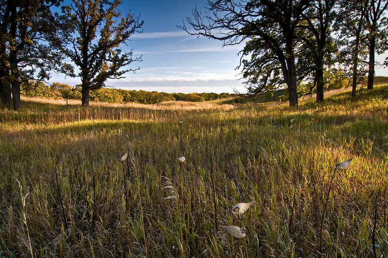 GP 005                  Late afternoon light on an oak savanna, Glacial Park Conservation Area, McHenry County, Illinois.