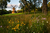 Fabyan Windmill and Wildflowers