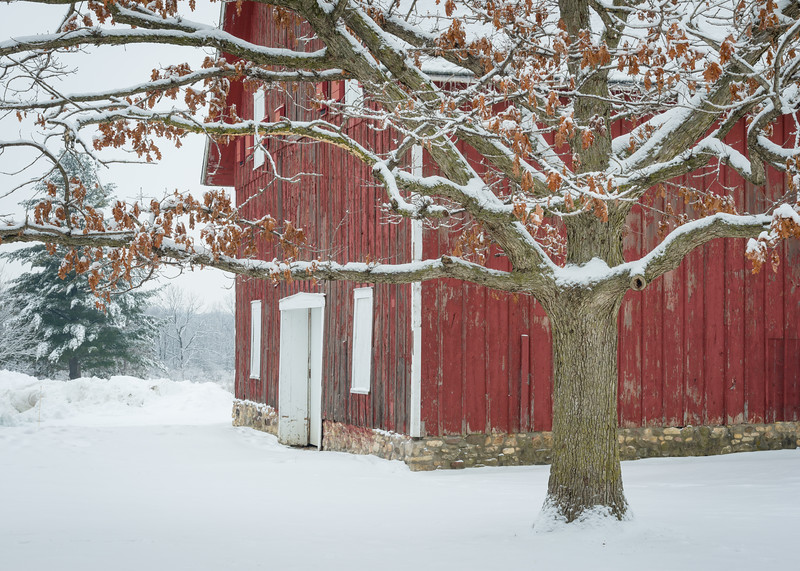 LO 002<br /> <br /> An historic red barn weathers the winter snows at Leroy Oaks Forest Preserve, Kane County, Illinois.