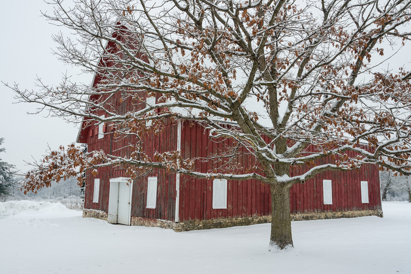 LO 001<br /> <br /> An historic red barn weathers the winter snows at Leroy Oaks Forest Preserve, Kane County, Illinois.