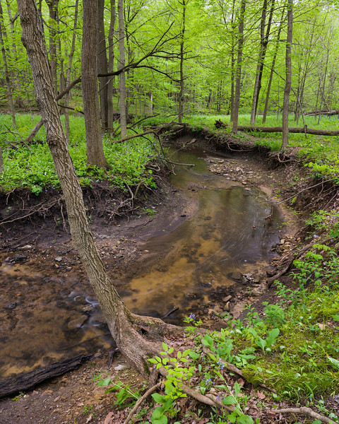 OW 003<br /> <br /> Lily Cache Creek winds its way through the spring woods at O'Hara Woods Nature Preserve in Will County, Illinois.