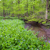 OW 004<br /> <br /> Lily Cache Creek winds its way through a sea of virginia bluebells at O'Hara Woods Nature Preserve, Will County, Illinois.