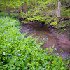 OW 005<br /> <br /> Lily Cache Creek winds its way through a sea of virginia bluebells at O'Hara Woods Nature Preserve, Will County, Illinois.
