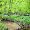 OW 016<br /> <br /> Lily Cache Creek flows through a spring landscape of virginia bluebells and old growth forest.