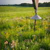SFR 001<br /> <br /> Sunset light on a bluebird house on the edge of Shoe Factory Road Prairie in Cook County, Illinois.