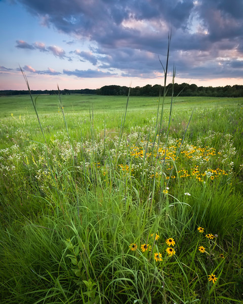 SFP 013<br /> <br /> Big bluestem grass reaches toward a sunset sky at Shoe Factory Road Prairie in Cook County, Illinois.