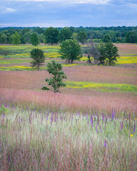 SFP 024<br /> <br /> Layers of warm tones emerge as the late summer prairie transitions into the early fall season.  Shoe Factory Road Nature Preserve, Cook County, Illinois, USA.
