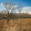 SW 008<br /> <br /> Afternoon light on prairie grasses and winter trees.  Spears Woods Forest Preserve, Cook County, Illinois.