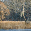 SW 013<br /> <br /> Sunset light on Hogwash Slough in winter.  Spears Woods Forest Preserve, Cook County, Illinois.