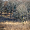 SW 010<br /> <br /> Afternoon light on prairie grasses and winter trees.  Spears Woods Forest Preserve, Cook County, Illinois.