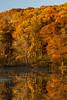 Autumn Oaks II