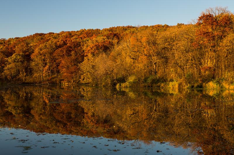 Autumn Oaks I