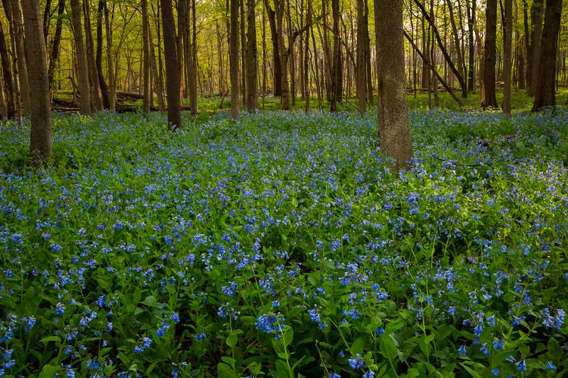 Blues in the Woods II