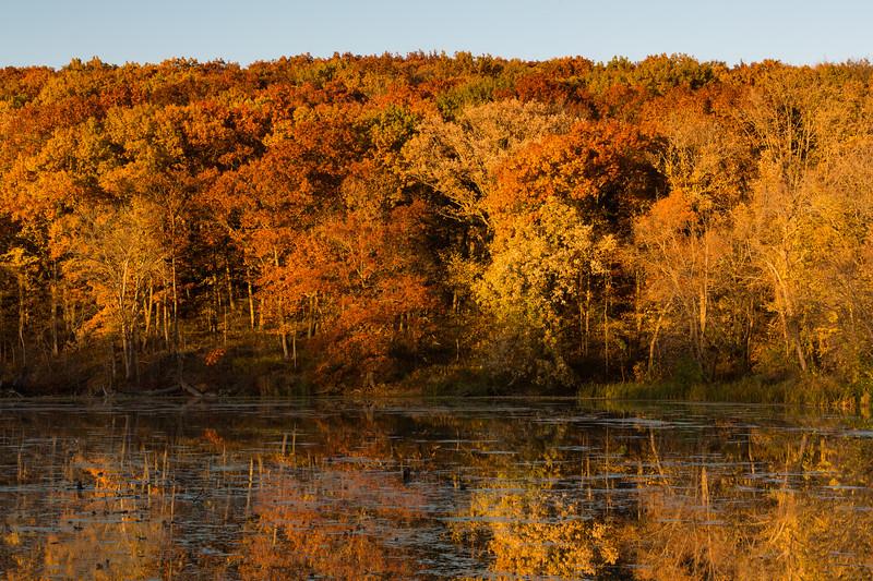 Autumn Oaks IV