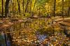 Hammel Woods autumn scene. Shorewood, IL<br /> <br /> IL-201021-0008