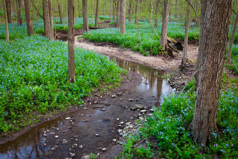 Bluebells & Creek