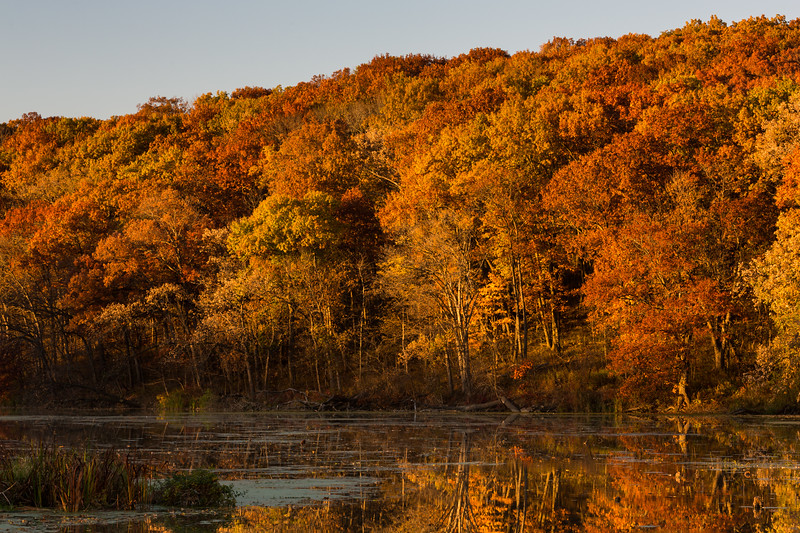 Autumn Oaks III
