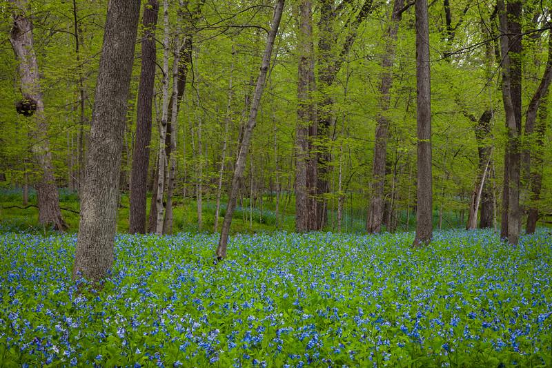 May at Messenger Woods