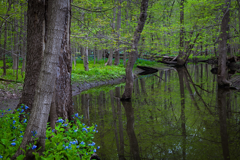 Spring Creek Bend
