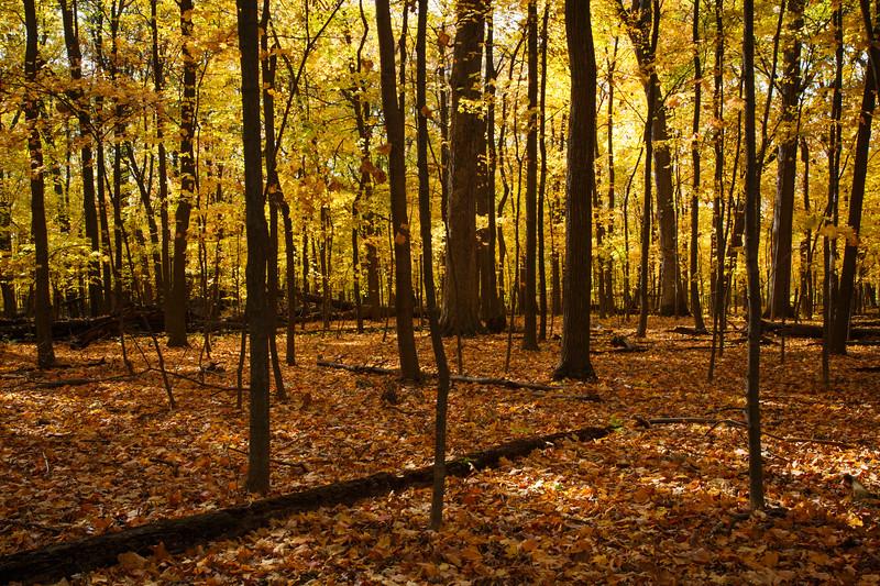 Hammel Woods autumn scene. Shorewood, IL<br /> <br /> IL-201021-0010