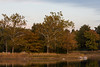 Meadow Lake Autumn