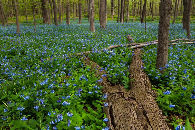Spring Blue III