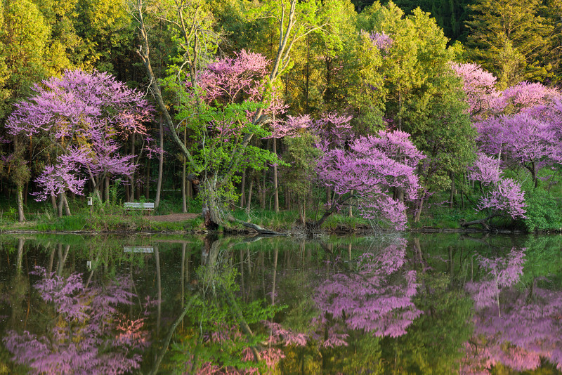 Spring color refelcts on the waters of Lake Marmo. Lisle, IL<br /> <br /> IL-110512-0075