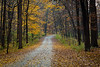 Fall color along the road through the East Woods of the Morton Arboretum. Lisle, IL<br /> <br /> IL-121023-0002