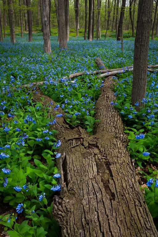 Spring Blue IV