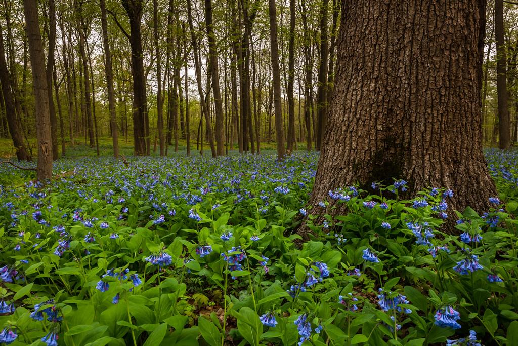 Spring Blue I