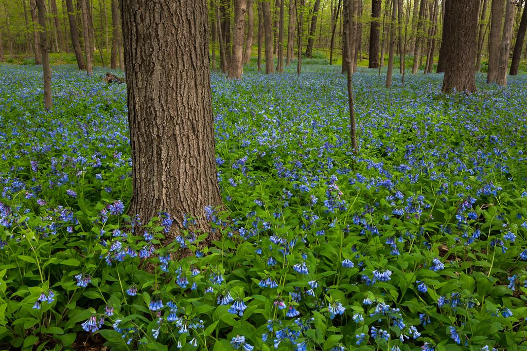 Spring Blue II